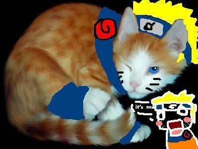 naruto rhe cat