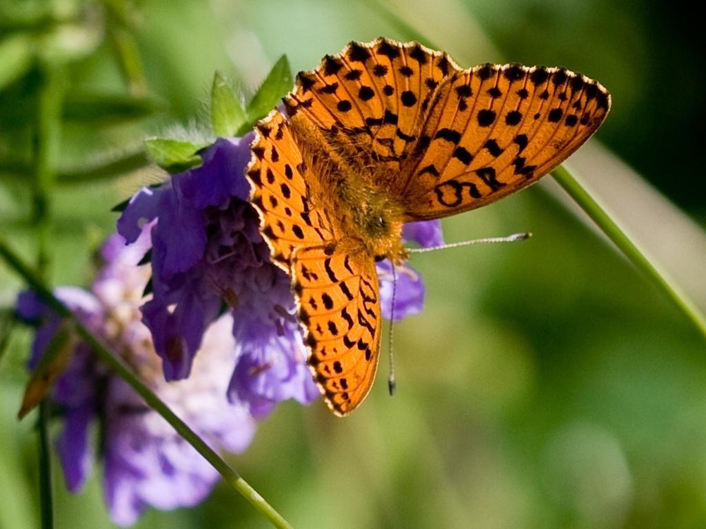 Images Of Orange Butterflies | Wallpapers Gallery