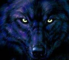 Wolves Images Blue Wolf Wallpaper And Background Photos