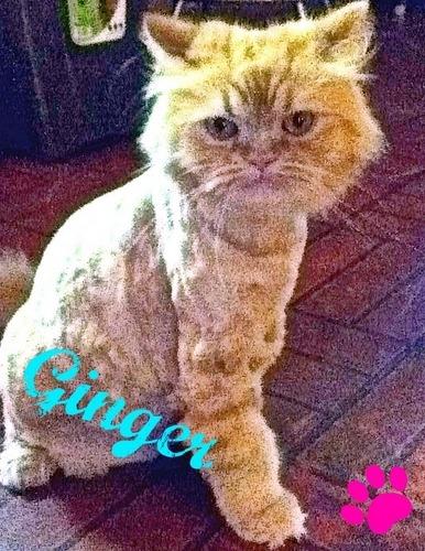 Ginger (: