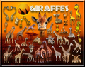 Giraffes - africa photo