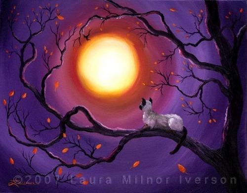 Haunted boom ,Full moon .creepy cat
