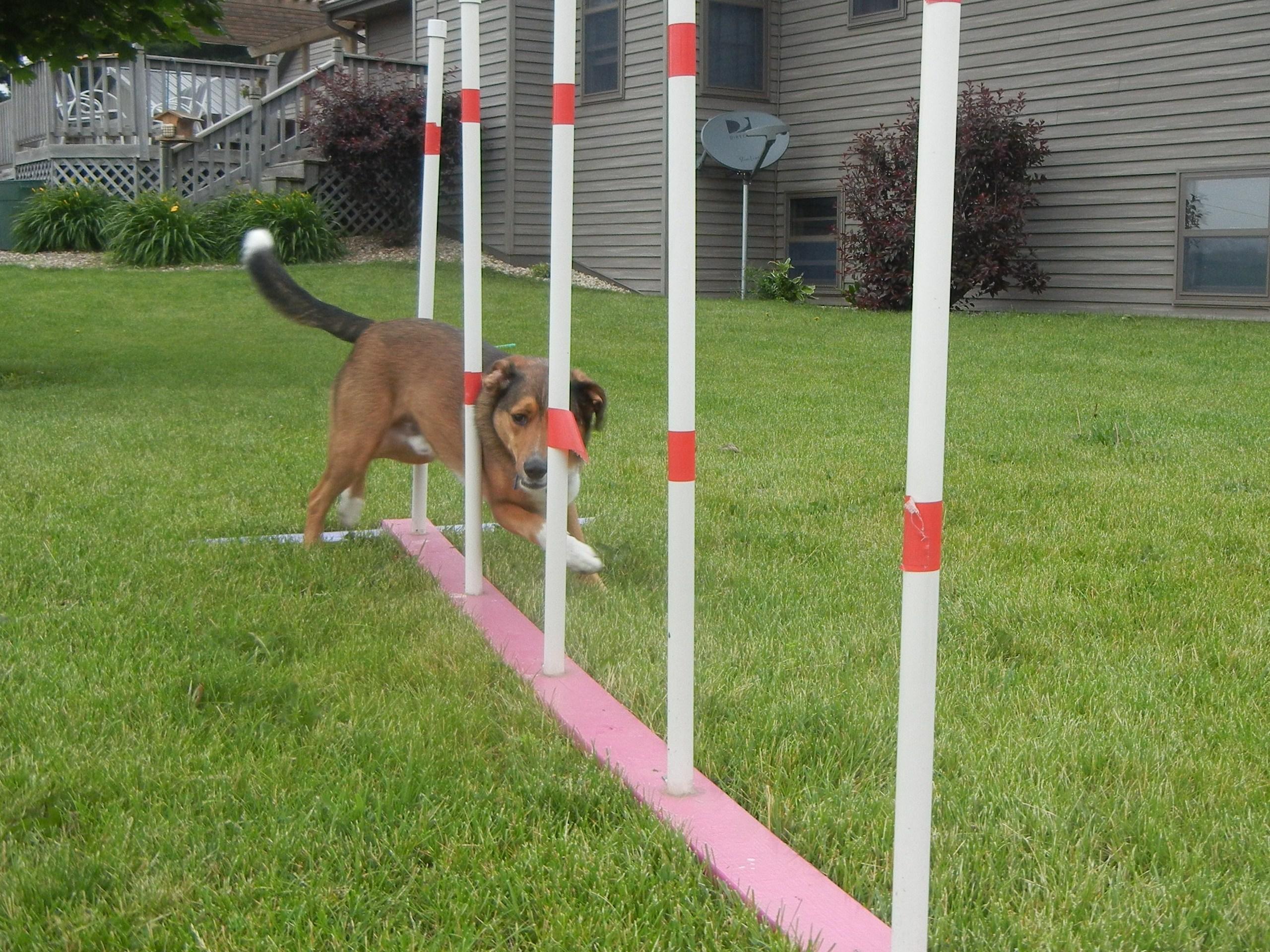 Dog Agility Related Keywords - Dog Agility Long Tail