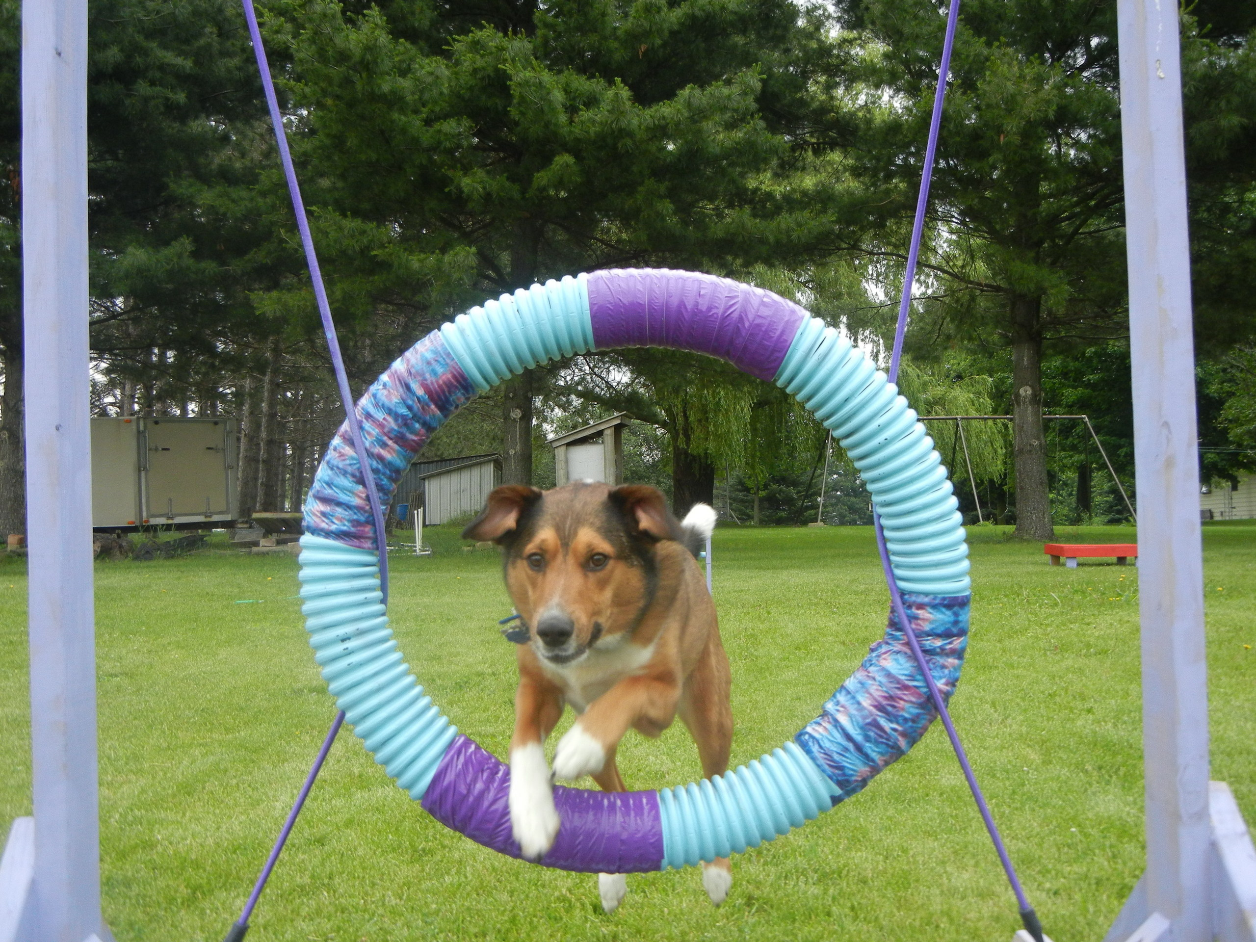 Dog Agility images MosesAgility HD wallpaper and