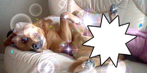 My dog Pudge! X3