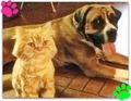 Tracker and Ginger  <3 - fanpop-pets photo
