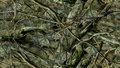 Fishouflage - fishouflage photo