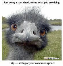 Ostrich giving あなた the eye