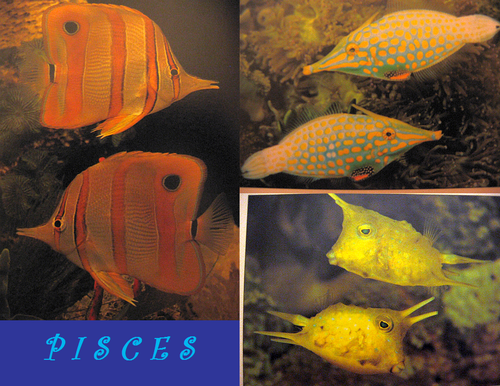 PISCES: The Fish