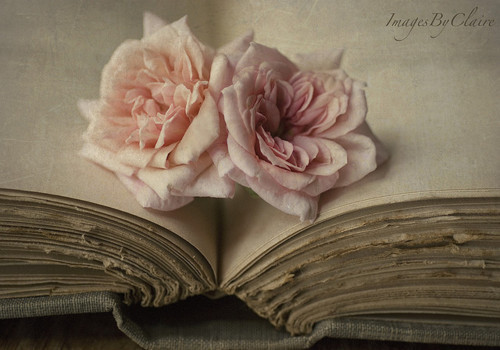 boeken to Read achtergrond with a rose, a bouquet, and a rose entitled book love