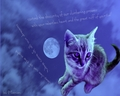 Cat's dream - cats wallpaper