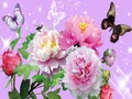 Flowers and Butterflies - yorkshire_rose wallpaper