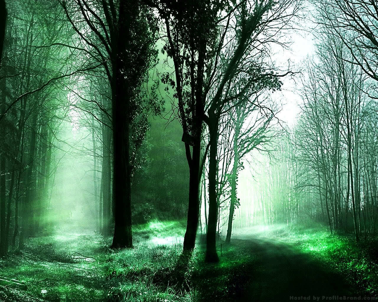Desktop Backgrounds Forest Forest pathes