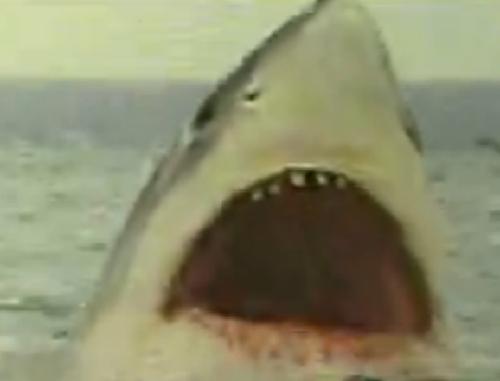 Jaws 5 Cruel Jaws' 鲨鱼
