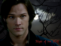 Night of the Wolf - sam-winchester wallpaper