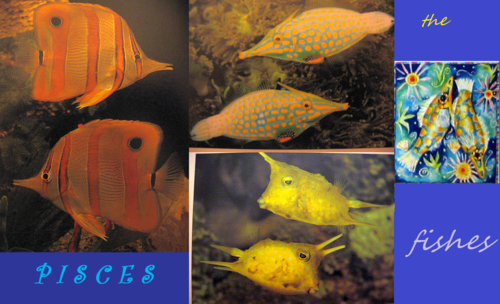 Pisces: The Fishes