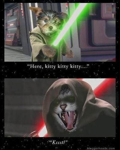 stella, star Wars parody