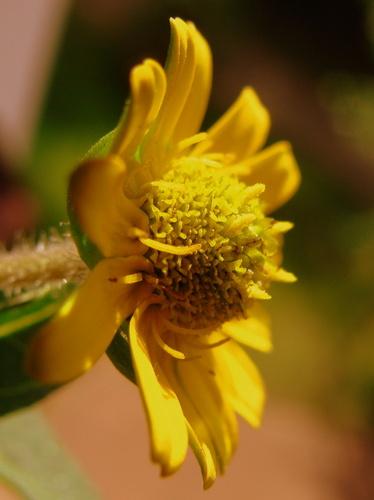 Yellow little 꽃