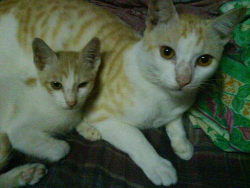 my two mèo