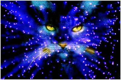 New Here? Starclan-warrior-cats-club-23147083-400-265