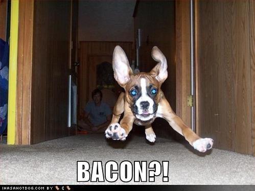 speck Dog!!!!!!!