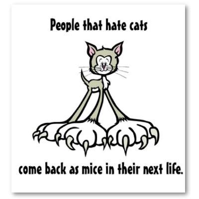 Cat Quotes - Jeϟϟi\'s Groupies ♤ Fan Art (23260894) - Fanpop
