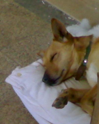 My Dog Luky