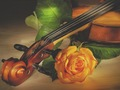daydreaming - Sound of violin wallpaper