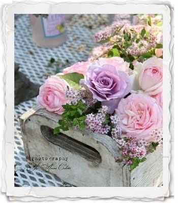 Vintage hoa hồng For Princess-Yvonne ♥