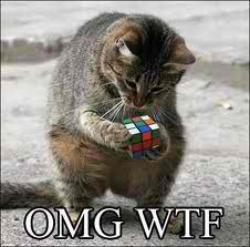 the cat and the cube - animal-humor Photo