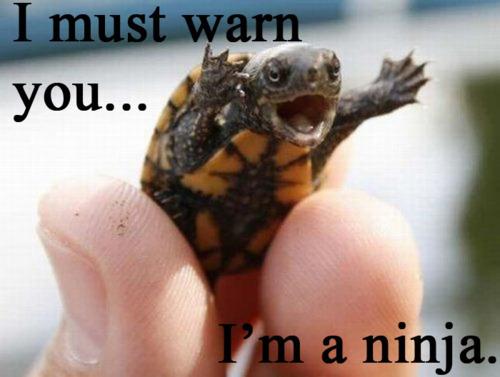 -Turtle-