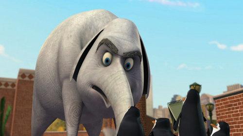 An elefante Never Forgets!