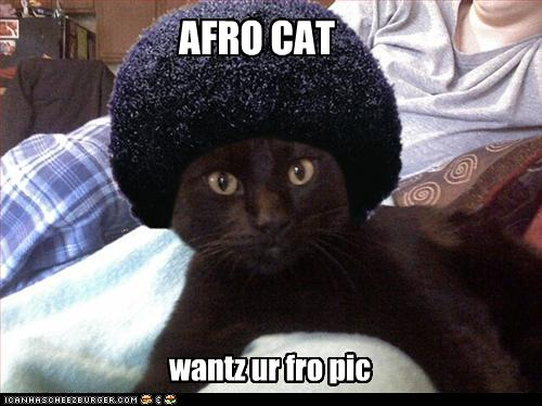 Животные with afros