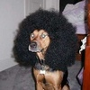 Random photo called Animals with afros