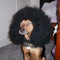 animaux with afros