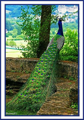 Beautifu Birds