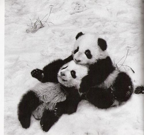 もっと見る Pandas!
