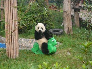 lebih Pandas!