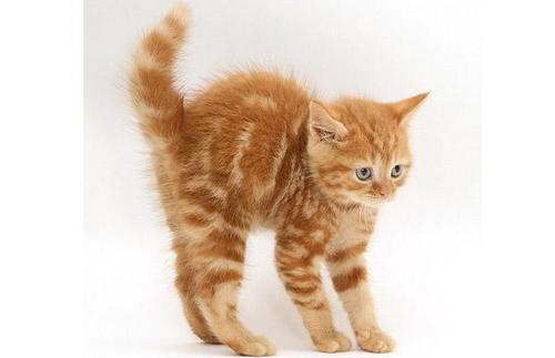 Nala (Zoey's cat)