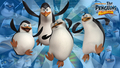 Nwe Wallpaper! - penguins-of-madagascar wallpaper