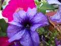 Purple Flower - photography photo