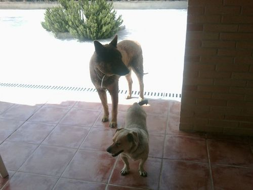 Rufo and boby