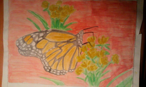See my School Proyects!!!: Monarch تیتلی