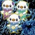 Shiny Oshawott Trio