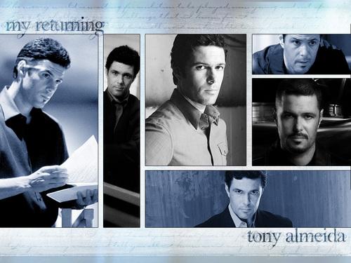 Tony Almeida wallpaper