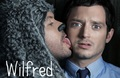 Wilfred - wilfred photo