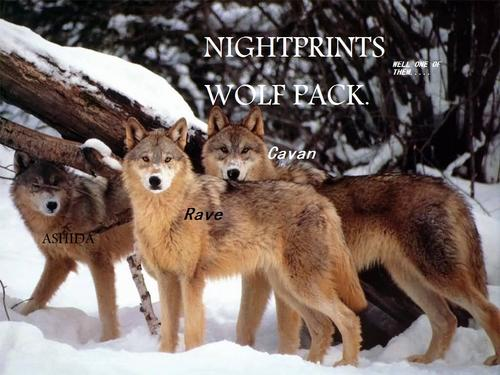 one of the packs