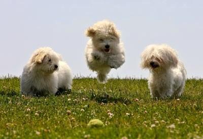 Adorable chiens