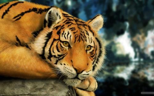 Animals...