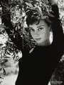 Audrey Hepburn: 1929-1993 - fallen-idols photo